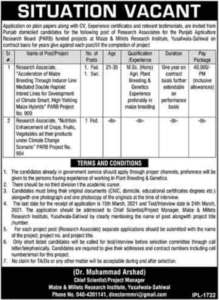 Sahiwal Jobs 2021 at Maize & Millets Research Institute